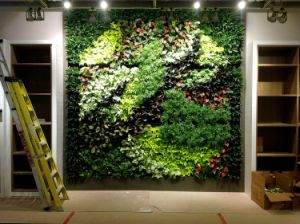 Indoor Decoration Evergreen Artificial Grass Wall pictures & photos