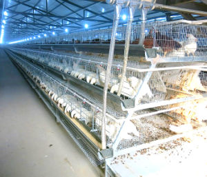 Broiler Poultry Farm with Automatic Chicken Cage Equipment pictures & photos
