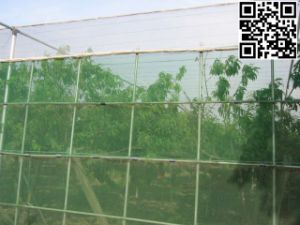 Meyabond Anti Insect Net for Orchard (MYB-006) pictures & photos