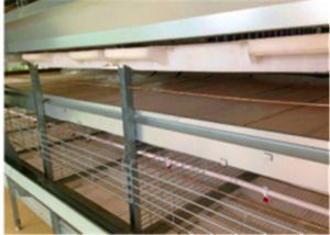 Automatic Hot/Cold Galvanization Skillful Technology Broiler Chicken Battery Cage for Farm (H Frame Type) pictures & photos