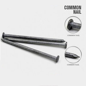 Professional Polished Common Nail with Good Quality pictures & photos