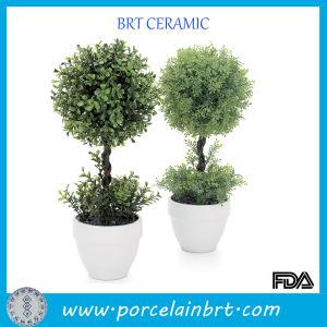 Wholesale Cheap White Ceramic Pot for Plants pictures & photos