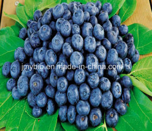 Pure Nature Bilberry Extract Anthocyanidins 15%-35% for Cosmetics pictures & photos