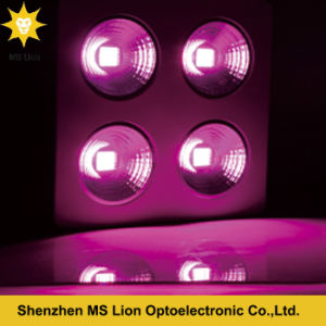 Red Blue 800W COB LED Grow Light for Flowers pictures & photos