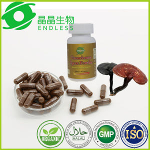 GMP Certified OEM Available Reishi Spore Powder Capsule pictures & photos