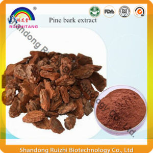 Top Quality OPC 95% Pine Bark Extract P. E. 10: 1 4: 1 20: 1 pictures & photos
