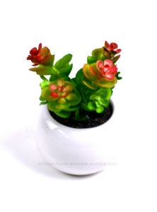 Life-Like Artificial Succulent Potted Plants with Ceramic Pot for Decoration pictures & photos