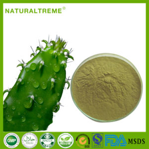 Super Healthy Weight Loss Food Cactus Leaf Extract 10: 1