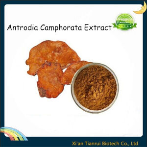 Fungi Antrodia Camphorata Extract pictures & photos