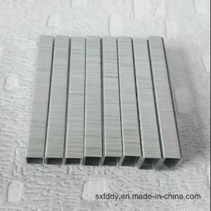 Low Price 8016/38016 Staples Series Supplier High Quality Staples pictures & photos