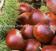 New Crop Chestnut with Competitive Price pictures & photos