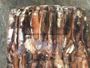 Illex Squid (Jigger, Sea Frozen) pictures & photos