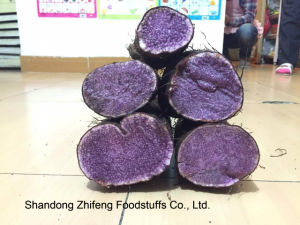 Fresh 2017 Chinese Purple Yam with Exporting Quality pictures & photos