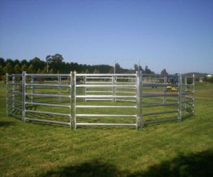1800mm*2100mm Oval Tube Australia Cattle Horse Panel pictures & photos