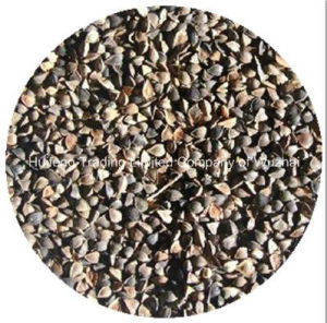 High Quality Export Shanxi Buckwheat