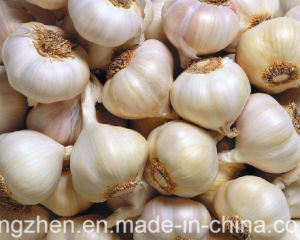 5.0cm and up Small Packing Hybridization Garlic in 2017 pictures & photos