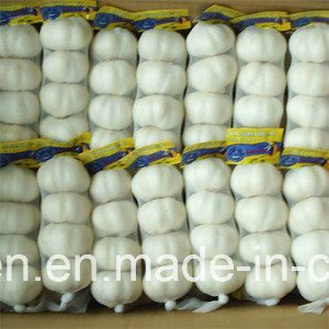 High Quality Chinese Fresh Pure White Garlic From Jinxiang Origin pictures & photos