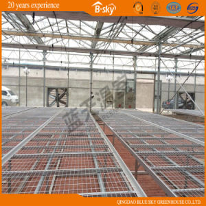 Netherlands Technology Low Cost Multi-Span Green House pictures & photos