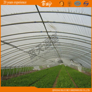 Low Cost Arch Greenhouse for Planting Celery pictures & photos
