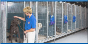 Hot Dipped Gavanized Kennels