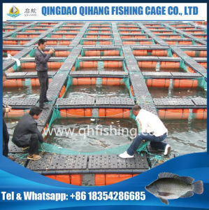 PE Net Fish Farming Cage for Catfish Breeding pictures & photos