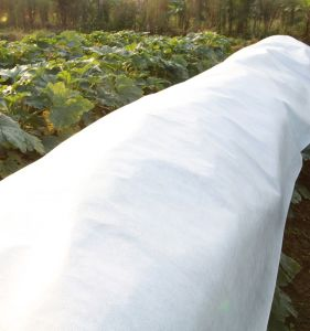 Anti UV Treated PP Non Woven for Crop Row Cover pictures & photos