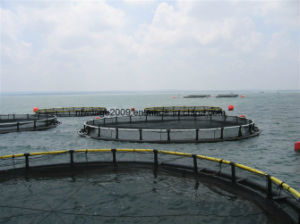 China Factory HDPE Floating Cage for Fish Farming pictures & photos