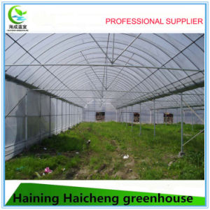 Hot DIP Galvanized Multi Span Film Greenhouse pictures & photos