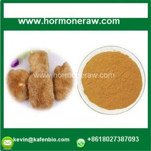 Best Sexual Enhancement Natural Organic Herbal Root Epimedium Maca Extract pictures & photos