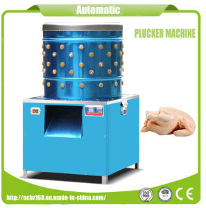 Stainless Steel Material Electric Automatic Poultry Plucker Machine pictures & photos