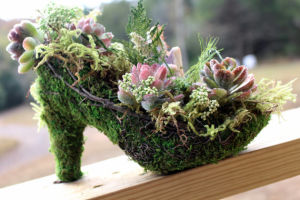 Self-Watering Moss & Succulents Shoe Planter Centerpiece pictures & photos