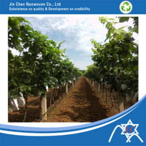 PP Nonwoven Fabric for Fruit Cover Bag, Garden Tool pictures & photos