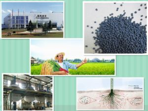 Compound Organic NPK Water Soluble Macronutrients Granule Fertilizer pictures & photos