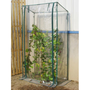 Tomato Greenhouse with PVC Cover pictures & photos