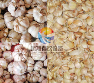 Garlic Separating Machine Fx-139 pictures & photos