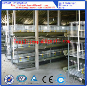Egg Layer Chicken Cage/Chicken Cage pictures & photos