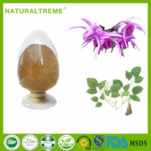 Men Body Building Supplements Epimedium Extract