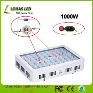 LED Plant Light 300W 450W 600W 800W 900W 1000W 1200W Full Spectrum Hydroponic LED Plant Grow Light pictures & photos