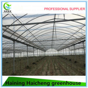 Multi-Span Type and Large Size PC Sheet Commercial Greenhouse pictures & photos