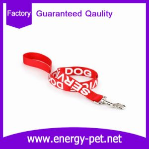 Service Dog Collar and Leash in Training pictures & photos