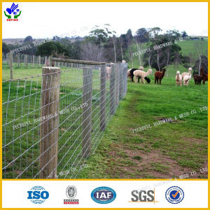 Rust Prevention Field Fence (HPCF-0615) pictures & photos