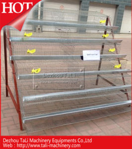Quail Layer Cage Wiht 6 Tiers for 500 PCS