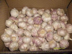 Carton Packing Normal White Garlic (5.0cm and up) pictures & photos