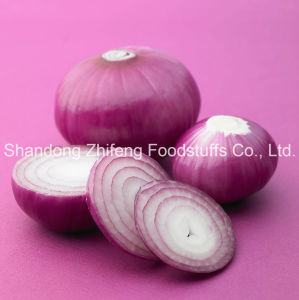 2016 Fresh Red Purple Onion pictures & photos