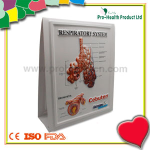Urinary Tract Plastic Education Medical 3D Poster pictures & photos
