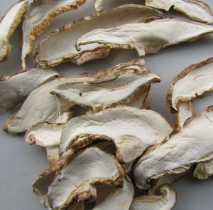 High Quality Dried Shiitake Mushroom Slice Factory pictures & photos