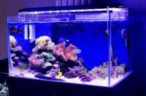 High Power 120cm 144W LED Water Plant Aquarium LED Lights pictures & photos