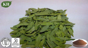 Natural Health Senna Leaf Extract 6%~20% Sennosides pictures & photos