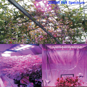 LED Grow Light Plant Light Full Spectrum for Seedlings Hydroponics Grow Lights of Plants Veg Herbs (Dimmable) pictures & photos