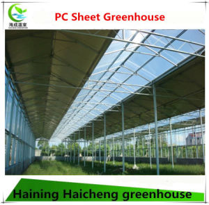 Large Solar Agricultural Greenhouse for Sale pictures & photos